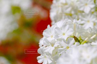 近くの花のアップ - No.787508