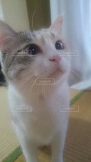 カメラを見ている猫 - No.787947
