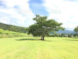 夏の緑の芝生の写真・画像素材[789731]