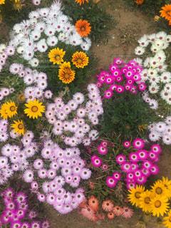 色とりどりの花のグループ - No.788339