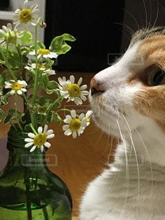 お花を食べたい猫の写真・画像素材[788356]