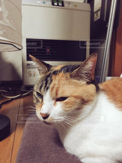 ストーブの前で暖を取る猫の写真・画像素材[788359]