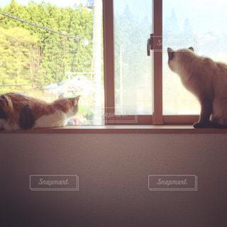 窓の前に座っている猫の写真・画像素材[788444]