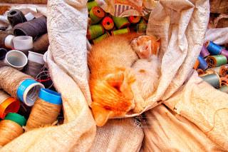 ベッドの上のぬいぐるみの動物のグループの写真・画像素材[902792]