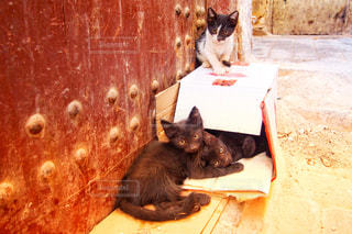 ベンチに座って猫の写真・画像素材[902801]