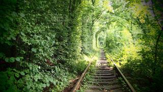 近くの森の真ん中に橋の写真・画像素材[1534144]