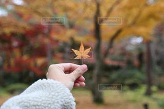 小さな木を持つ手の写真・画像素材[2387299]