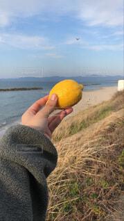 フレッシュなレモンの写真・画像素材[3960818]