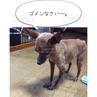 茶色と白犬 - No.814594