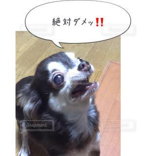 茶色と白犬 - No.814598