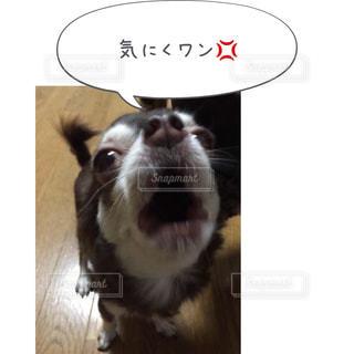 カメラを見て犬 - No.814607