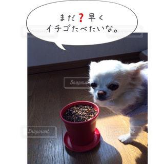 テーブルの上に座って小型犬 - No.814616