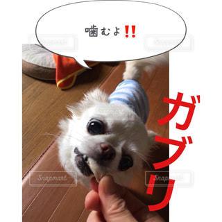着ぐるみを着た犬 - No.814619