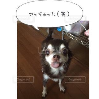 犬の写真のポーズは - No.814621