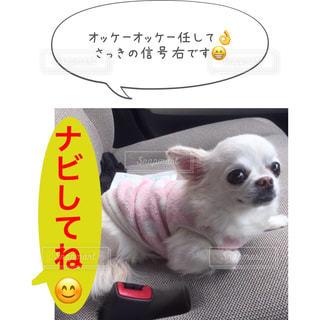オッケーオッケー任して👌さっきの信号右です😁 - No.943839
