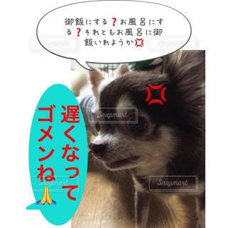 御飯にする❓お風呂にする❓それともお風呂に御飯いれようか💢 - No.950264