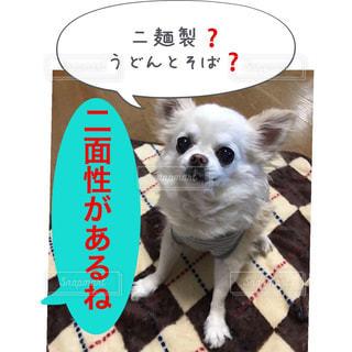 二麺製❓       うどんとそば❓ - No.952686
