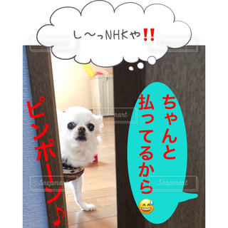し〜っNHKや‼️ 小豆ちゃん、ちゃんと受信料払ってるから😅 NHKは視聴していなくても、テレビを見れる環境なら受信契約義務があるんだって🤔 後編に続く…LINEスタンプでおなじみサンキューおっさんとゆかいな仲間たちの小豆ちゃんhttps://store.line.me/stickershop/author/93674/ja#チワワ#ゆかいな仲間達 #lineスタンプ販売中 #アメブロ更新 #サンキューおっさんとゆかいな仲間たち#やますけ#ミニチュアピンシャー#dmiakr0416 - No.1070959
