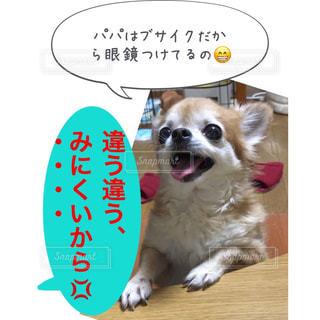 パパはブサイクだから眼鏡つけてるの😁 モナカちゃん、同じ読み方でも意味が全然違うよ💢 見にくい(みにくい:見るのがとても難しい事) 醜い(みにくい:姿、形が悪い、ブサイクな事)LINEスタンプでおなじみサンキューおっさんとゆかいな仲間たちのモナカちゃんhttps://store.line.me/stickershop/author/93674/ja #チワワ#ゆかいな仲間達 #lineスタンプ販売中 #サンキューおっさんInstagram#アメブロ更新 - No.1134791