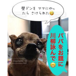 パパで川柳詠んで - No.1138851