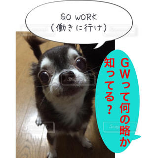 GO WORK             (働きに行け) きなこちゃーん😰 正解はゴールデンウィークだよ…働きに行けってたまにはゆっくりさせてぇー😱※正しくはgo to workでした、ゴメンなさーい🤣LINEスタンプでおなじみサンキューおっさんとゆかいな仲間たちのきなこちゃんhttps://store.line.me/stickershop/author/93674/ja #チワワ#ゆかいな仲間達 #lineスタンプ販売中 #サンキューおっさんInstagram#アメブロ更新 - No.1160106