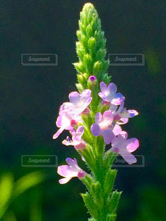 近くの花のアップ - No.790743
