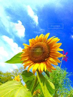 夏に負けないの写真・画像素材[790764]