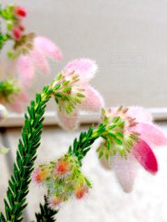 近くの花のアップの写真・画像素材[791976]
