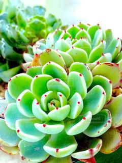 多肉植物 - No.793959