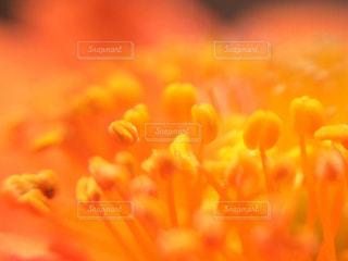 元気のでる色の写真・画像素材[794400]