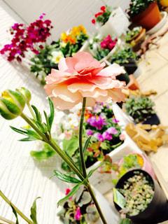 近くの花のアップの写真・画像素材[797871]