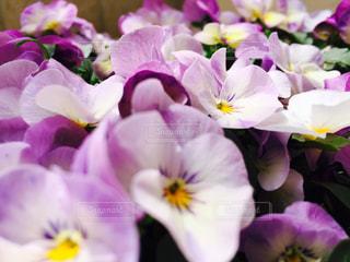 近くに紫の花のアップ - No.797878