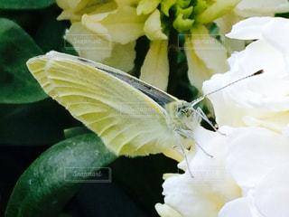 蝶の食事 - No.801983
