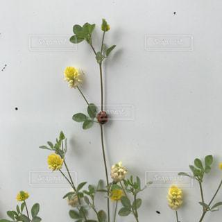 植物とてんとう虫の写真・画像素材[789625]