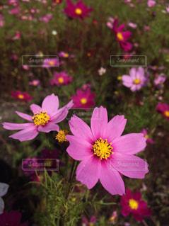 近くの花のアップ - No.790264