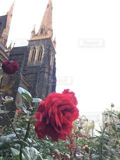赤い薔薇建物の前に座っています。の写真・画像素材[790338]
