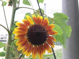 近くの花のアップの写真・画像素材[790344]