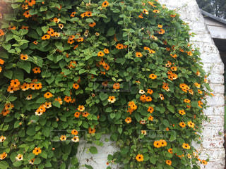 色とりどりの花のグループの写真・画像素材[790396]