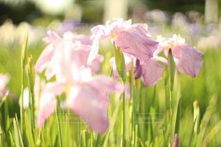近くの花のアップ - No.790794