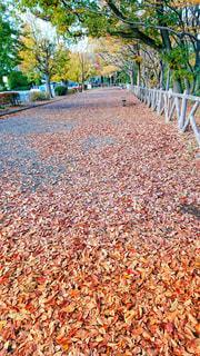 落ち葉の写真・画像素材[911019]