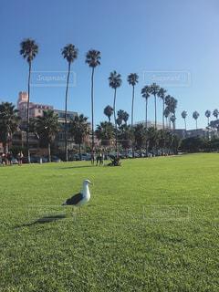 緑豊かな芝生でポーズをきめる鳥の写真・画像素材[795052]