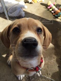 怒られて悲しそうな犬の写真・画像素材[853094]