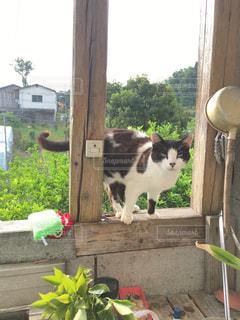 目つきの悪い野良猫の写真・画像素材[853104]