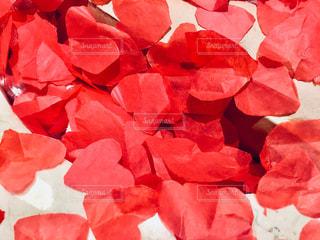 近くに赤い花のアップの写真・画像素材[999509]