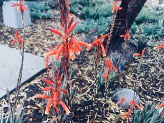 オレンジ色の花のグループの写真・画像素材[1079446]