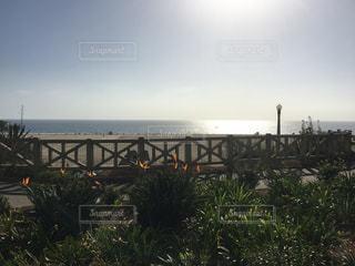 サンタモニカの海の写真・画像素材[791745]