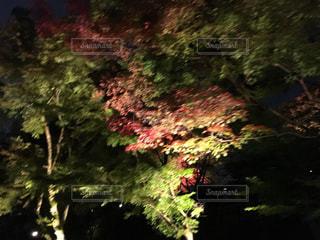 京都 清水寺の紅葉 - No.864073