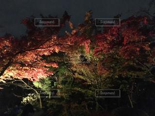 京都 清水寺の紅葉 - No.864080