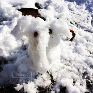 雪だるま?雪子象の写真・画像素材[791462]