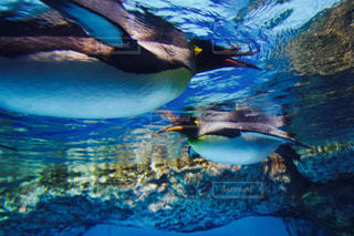 青い水の中を泳ぐ鳥の写真・画像素材[794081]